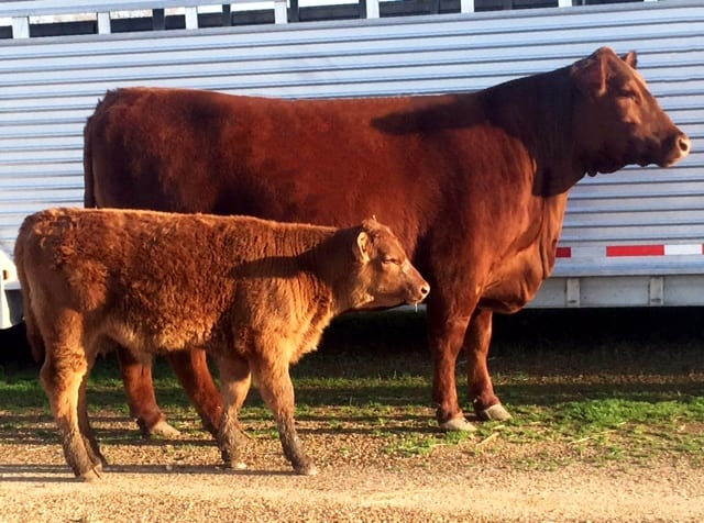 South East Red Angus Association